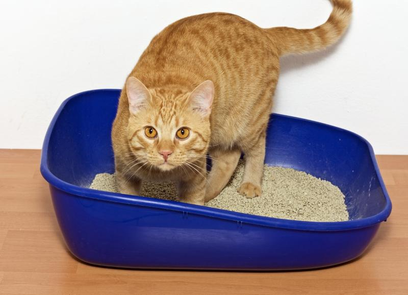 litter tray for cat