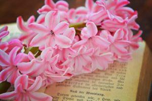 Hyacinth cat plant