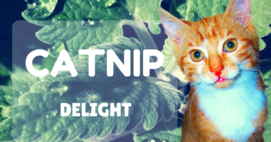 catnip for cats