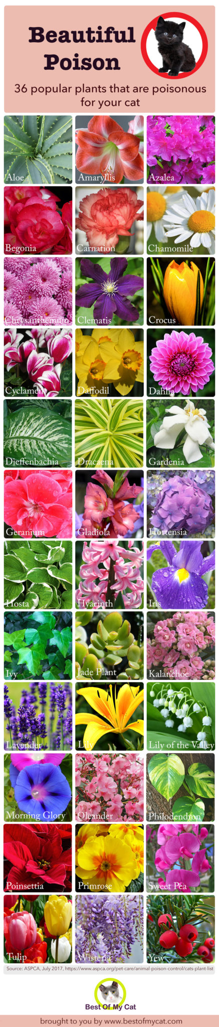 plants poisonous to cats infographic best of my cat. Black Bedroom Furniture Sets. Home Design Ideas