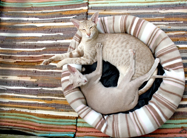 cats in a heated cat bed