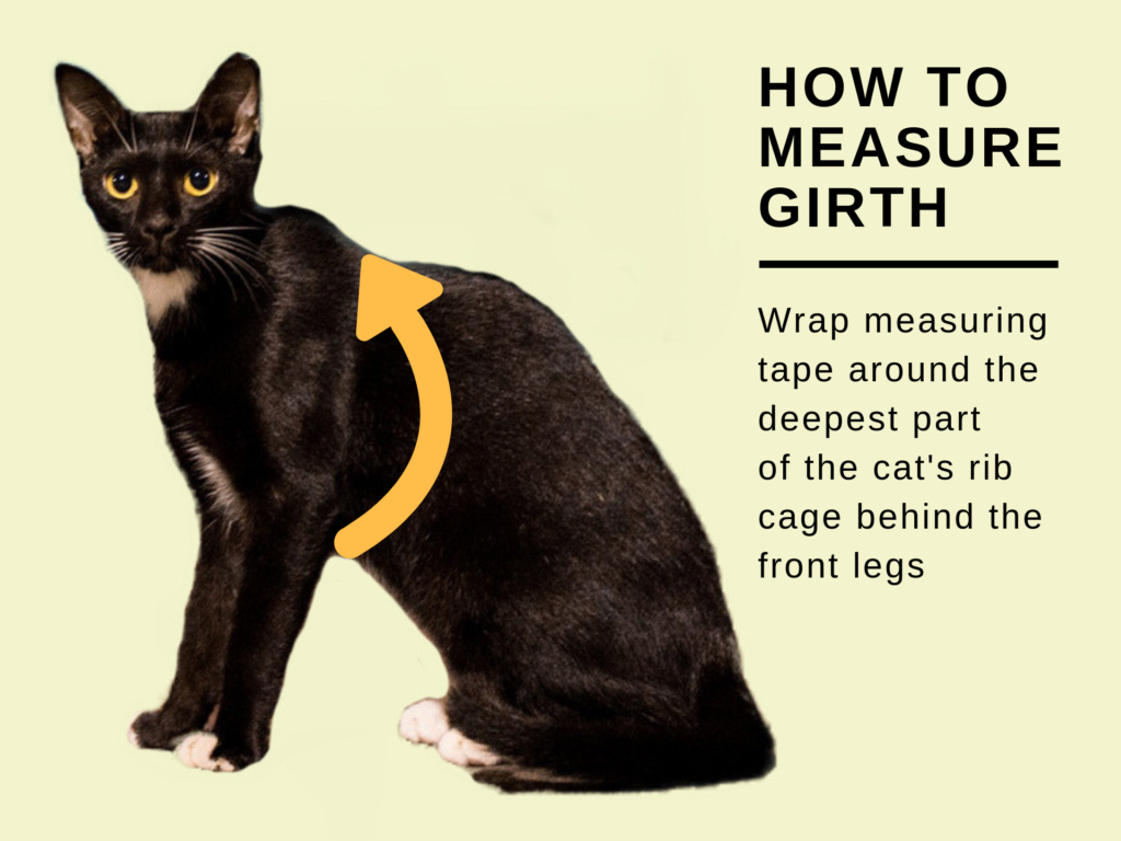 how to measure cat's girth