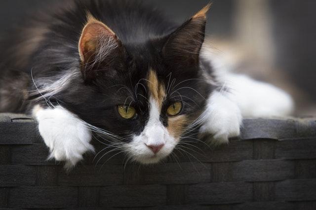 best outdoor cat houses - buyer's guide