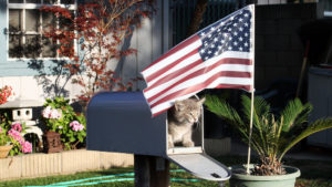 cats in the united states