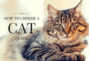 how choose cat guide