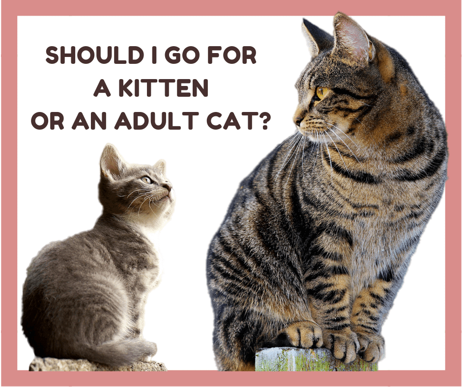 kitten or adult cat