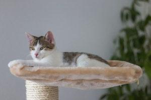 cat sitting on a cat tree