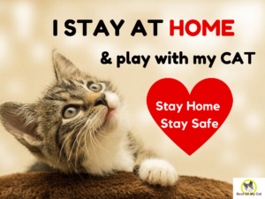 stay home stay safe cat