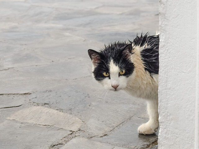 stray cat without a shelter