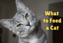 what to feed a cat