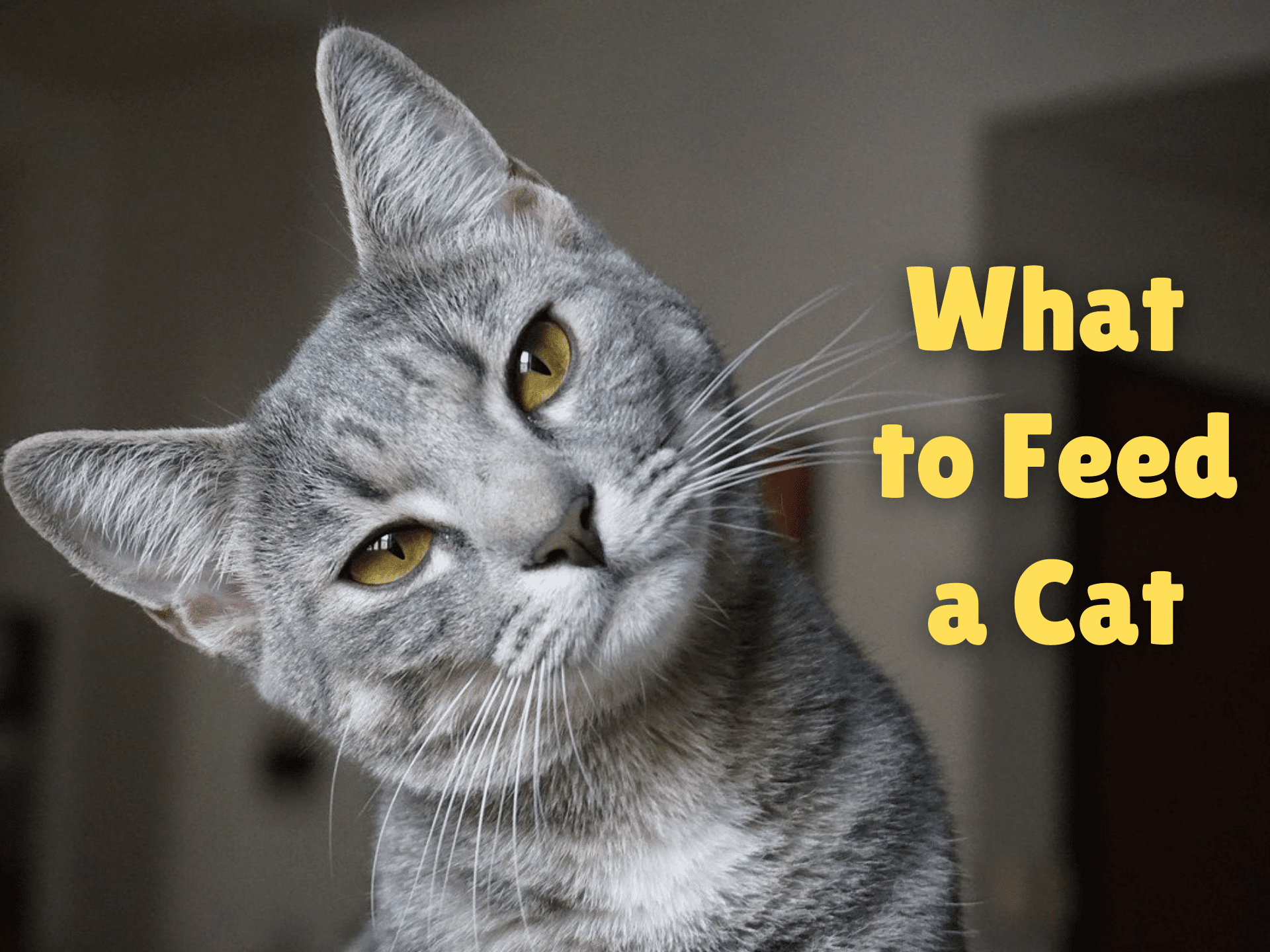 What to Feed a Cat (2020 Guide)