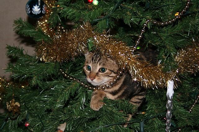 cat climbing on a christmas tree