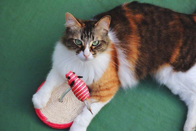 cat plays with an interactive cat toy