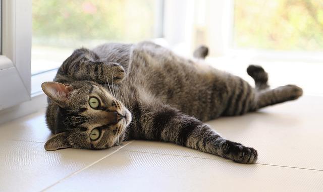 cat relaxing