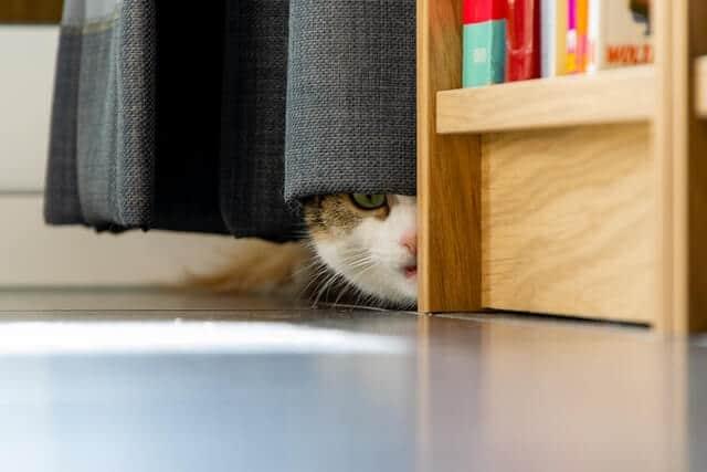 cat scared of strangers