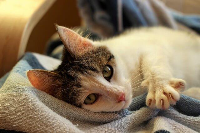 best cat nail caps reviews