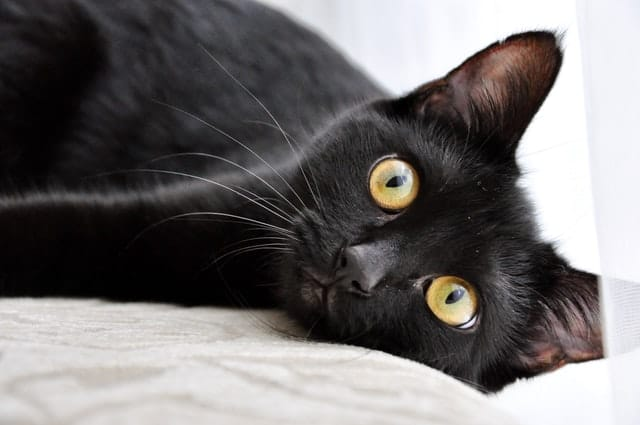 black cat names inspired by mythology