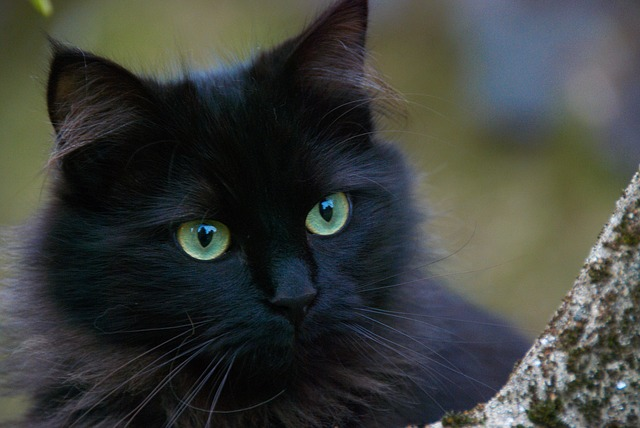 black cat names inspired by nature