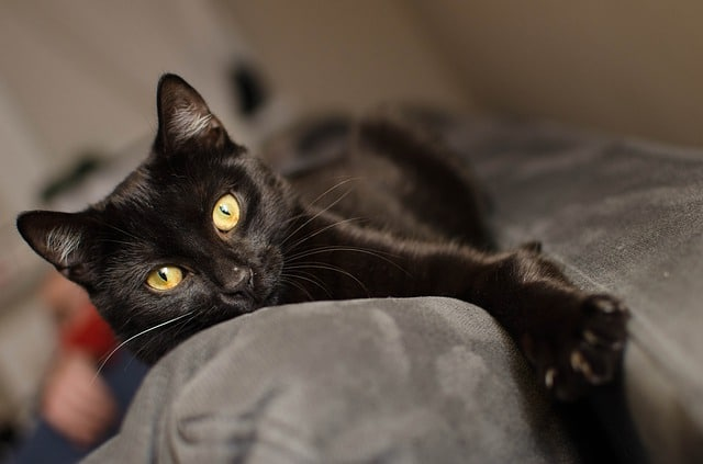 unique black cat names