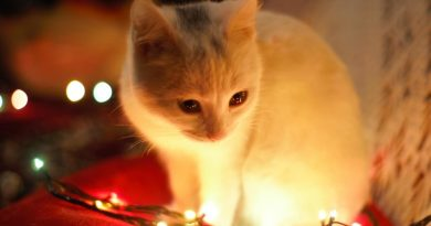 How to Keep Cat Safe at Christmas - Holiday Safety Tips for Cats