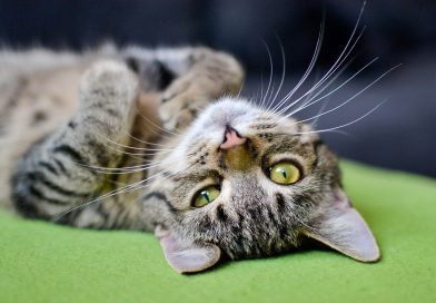 best cat calming products