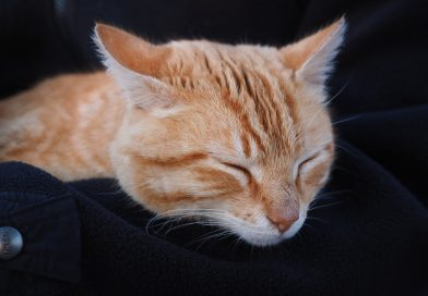 best cat calming spray