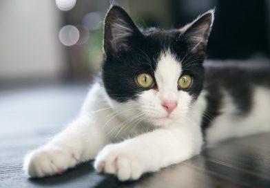 best cat ear cleaner