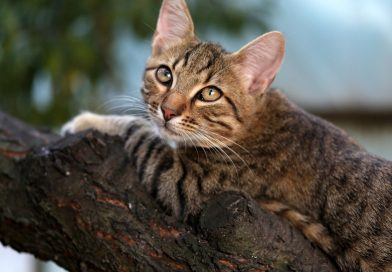 best flea treatments for cats