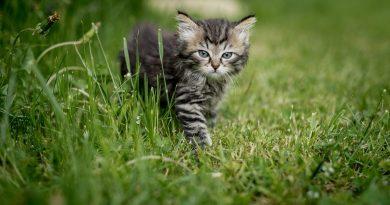 best outdoor cat enclosures