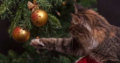 how to cat proof christmas tree